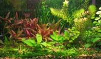 Аквариумных растений разных видов и