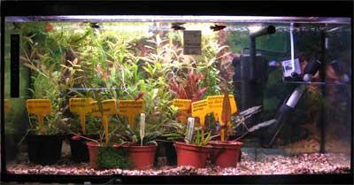 Аквариумные растения купить